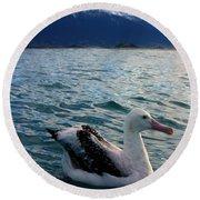 Wandering Albatross Round Beach Towel