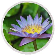 Water Lily 13 Round Beach Towel