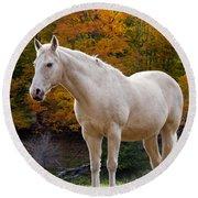 White Horse In Autumn Round Beach Towel
