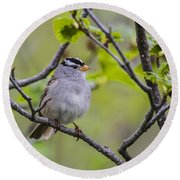 Whitecrowned Sparrow Round Beach Towel