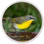 Yellow-breasted Chat Round Beach Towel