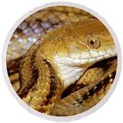 Yellow Rat Snake Round Beach Towel
