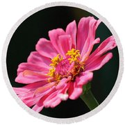 Zinnia From The Whirlygig Mix Round Beach Towel
