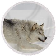 Wolf In Winter Round Beach Towel
