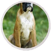 Boxer Dog Round Beach Towel