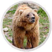 Brown Bear Round Beach Towel
