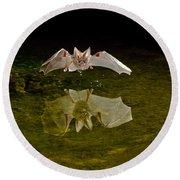 California Leaf-nosed Bat At Pond Round Beach Towel