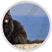 Cat In Hydra Island Round Beach Towel