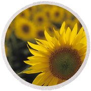 Close-up Of Sunflowers In A Field Round Beach Towel