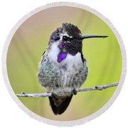 Costa's Hummingbird  Round Beach Towel