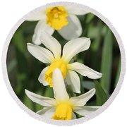 Cyclamineus Daffodil Named Jack Snipe Round Beach Towel