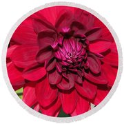 Dahlia Named Nuit D'ete Round Beach Towel