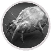 Dust Mite Round Beach Towel