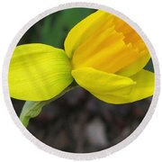 Dwarf Cyclamineus Daffodil Named Jet Fire Round Beach Towel