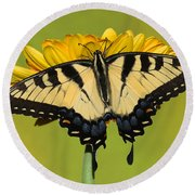 Eastern Tiger Swallowtail Butterfly Round Beach Towel