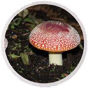 Fairy Mushrooms Round Beach Towel