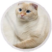 Flame Point Siamese Cat Round Beach Towel