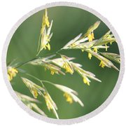 Flowering Brome Grass Round Beach Towel