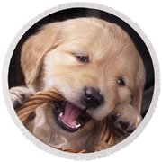 Golden Retriever Puppy Round Beach Towel