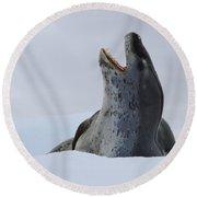 Leopard Seal Round Beach Towel