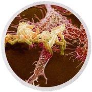 Macrophage Ingesting Pseudomonas Round Beach Towel
