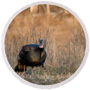 Male Eastern Wild Turkey Round Beach Towel