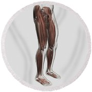 Male Muscle Anatomy Of The Human Legs Round Beach Towel