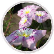 Morning Glory Named Pink Ensign Round Beach Towel