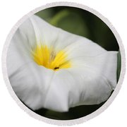 Morning Glory Named White Ensign Round Beach Towel