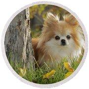 Pomeranian Dog Round Beach Towel