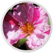 Portulaca Named Sundial Peppermint Round Beach Towel