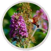 Snowberry Clearwing Hummingbird Moth Round Beach Towel