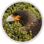 Striated Caracara Round Beach Towel
