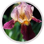 Tall Bearded Iris Named Indian Chief Round Beach Towel
