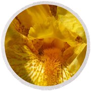 Tall Bearded Iris Named Saharan Sun Round Beach Towel