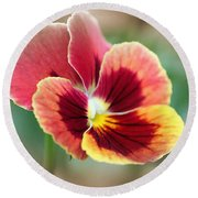 Viola Named Penny Red Blotch Round Beach Towel