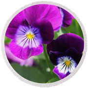 Viola Named Sorbet Plum Velvet Jump-up Round Beach Towel