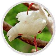 White Ibis Eudocimus Albus Round Beach Towel