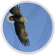 White-tailed Eagle Round Beach Towel