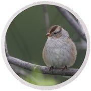 Whitecrowned Sparrow Round Beach Towel