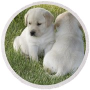 Yellow Labrador Puppy Round Beach Towel by Linda Freshwaters Arndt
