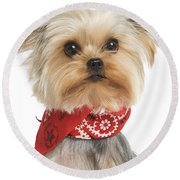 Yorkshire Terrier Dog Round Beach Towel