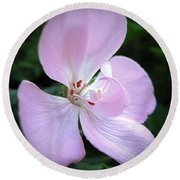 Zonal Geranium Named Tango Light Orchid Round Beach Towel