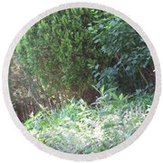 Camera Peak Thru Nature Buy Faa Print Products Or Down Load For Self Printing Navin Joshi Rights Man Round Beach Towel