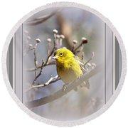 5393-006 - Pine Warbler-fb Round Beach Towel