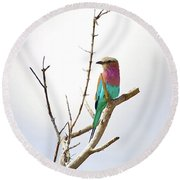 African Birds Round Beach Towel