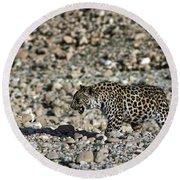 Arabian Leopard Panthera Pardus Round Beach Towel