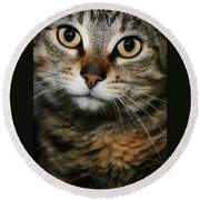 Brown Tabby Round Beach Towel