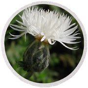 Centaurea Named The Bride Round Beach Towel