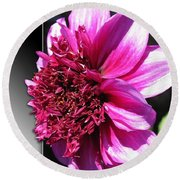 Dahlia Named Blue Bayou Round Beach Towel